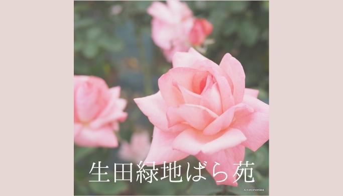 2018年秋の「生田緑地ばら苑」