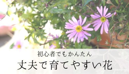 実際に育ててみた、ガーデニング初心者でも育てやすい花 ~春夏編~