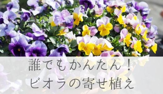冬~春の花を楽しむ 誰でも簡単にできるパンジー、ビオラの寄せ植え