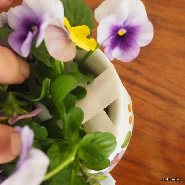 花瓶のビオラ