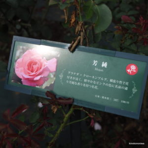 2018秋の生田緑地ばら苑