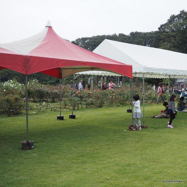 生田緑地ばら苑芝生