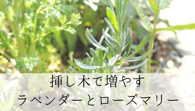 初めてでも簡単 ラベンダーとローズマリーを挿し木で増やす!