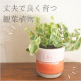 育てやすい観葉植物 キッチンやリビングにおすすめのペペロミア