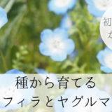 種から育てやすい花 ネモフィラと矢車草(ヤグルマギク)の成長記録
