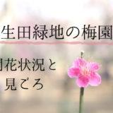 生田緑地の梅園へ行ってきました 開花状況と見ごろ、感想