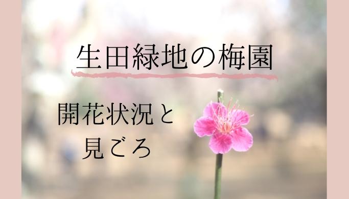 生田緑地の梅園 開花状況と見ごろ