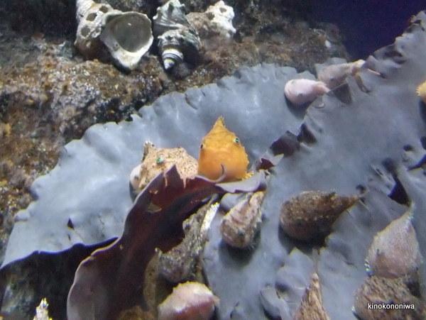 新江ノ島水族館の混雑