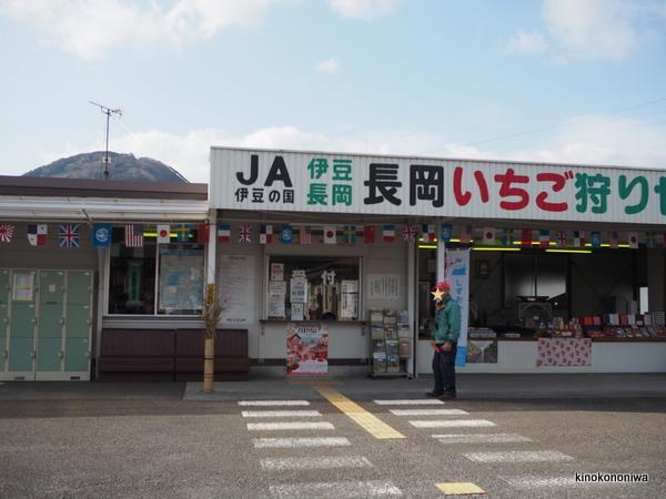 伊豆長岡いちご狩りセンター口コミ