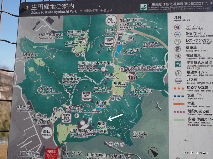 生田緑地の梅園