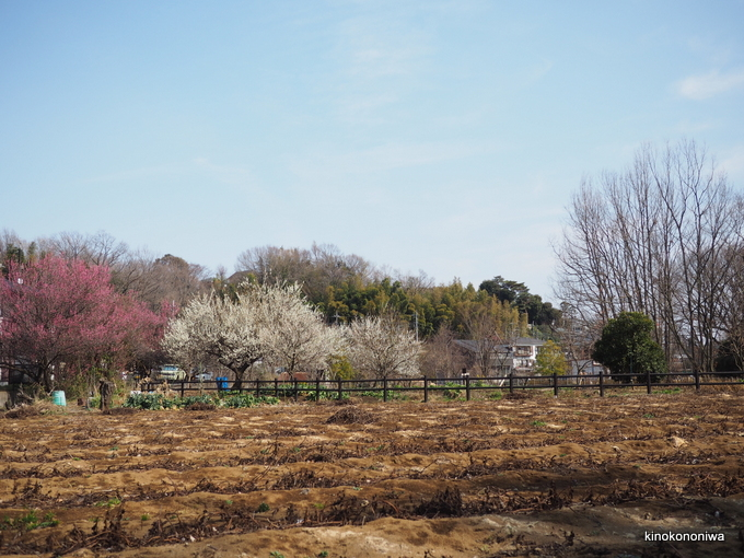 生田緑地 とんもり谷戸散策