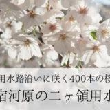 【川崎市】桜が見事なお花見スポット「宿河原」の二ヶ領用水