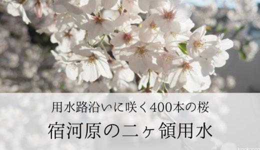 桜が見事なお花見スポット「宿河原」の二ヶ領用水(川崎市)