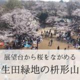 【川崎市】桜が見事なお花見スポット 生田緑地の枡形山