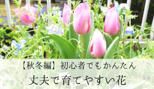 実際に育ててみた、ガーデニング初心者でも育てやすい花 ~秋冬編~