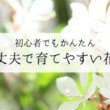 初心者でも育てやすい!おすすめの花17種類をまとめて紹介