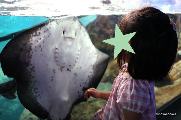 キャノンEOS M100で撮る水族館