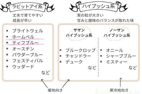 ブルーベリーの系統2
