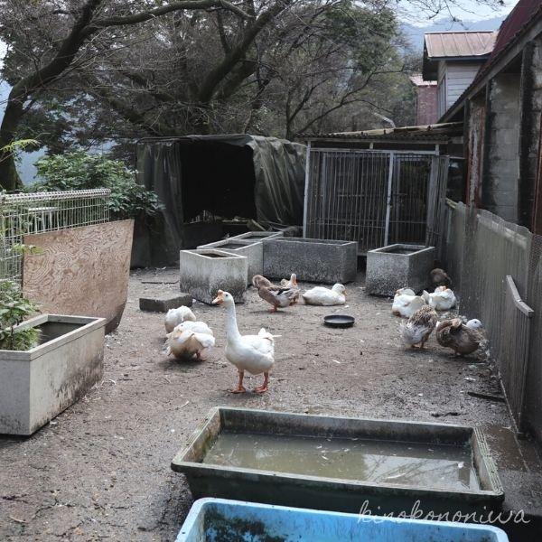 服部牧場の小動物