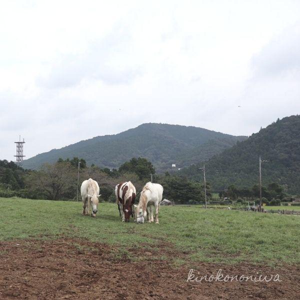 服部牧場の馬