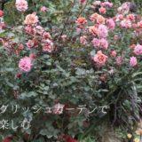 横浜イングリッシュガーデンの秋バラを楽しんできました