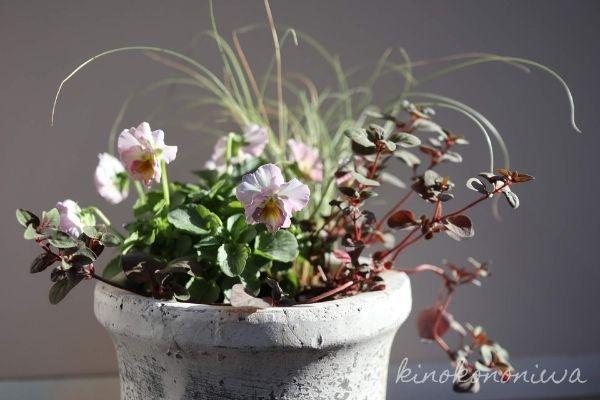 動きのある植物の寄せ植え