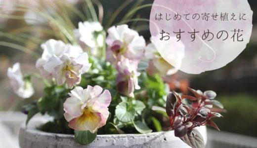 【初心者向け】寄せ植えにおすすめの花を季節ごとに紹介
