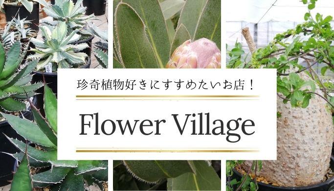 コーデックス・アガベ・南半球プランツ好きにおすすめの園芸店「Flower Village(フラワービレッジ)」へ行ってきました