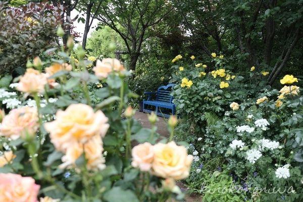 横浜イングリッシュガーデン春バラ