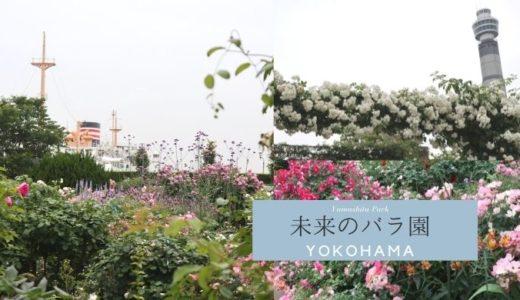山下公園「未来のバラ園」で横浜の景色とバラを楽しむ (1)