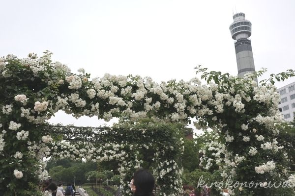 山下公園未来のバラ園12
