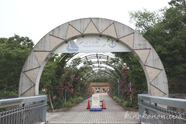 山下公園未来のバラ園1