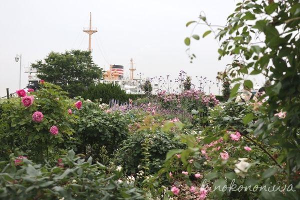 山下公園未来のバラ園11